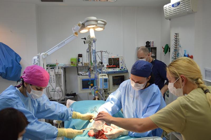 Chirurgie divet