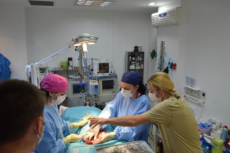 Chirurgie echipa divet