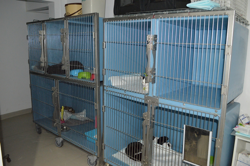 Spitalizare pisici divet