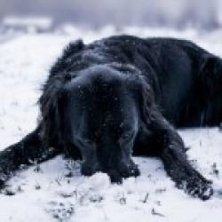 15 reguli de ingrijire pentru animalute iarna!