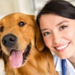 Prima vizită la veterinar